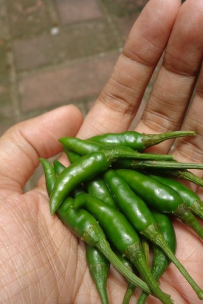 Top 14 Benefits Of Eating Green Chili Everyday In Points
